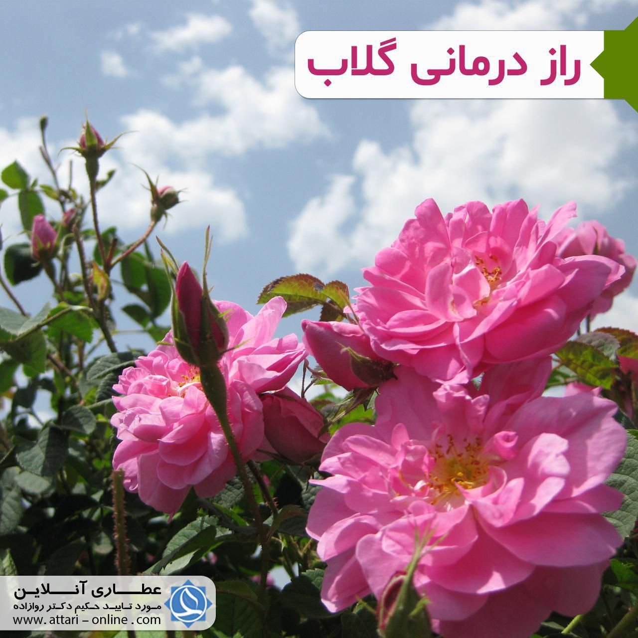 photo 2018 09 05 15 50 14 راز درمانی گلاب
