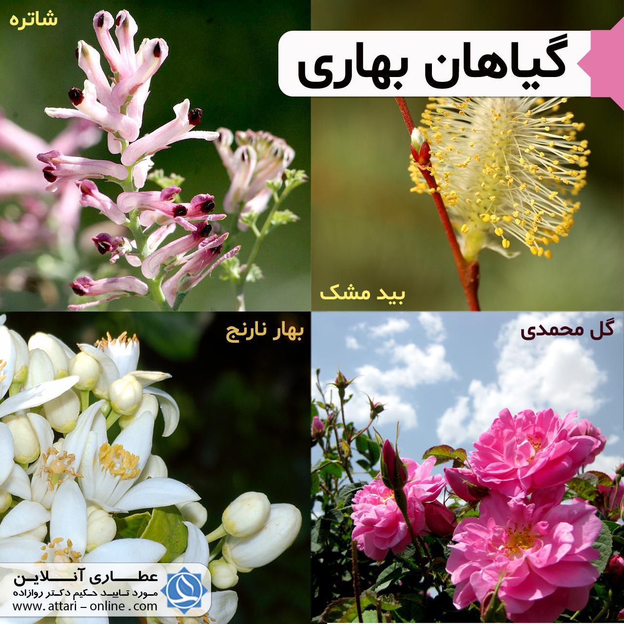 گ ک3 آشنایی با گیاهان بهاری